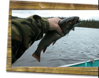 image-poisson-forfait-pourvoirie-du-lac-husky